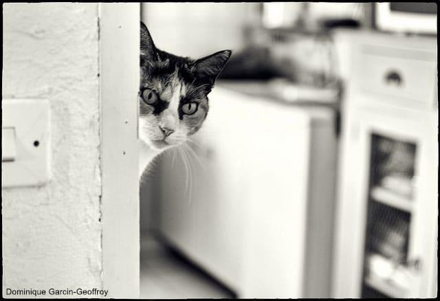 Comment faire perdre une mauvaise habitude son chat - Mon chat me colle plus que d habitude ...