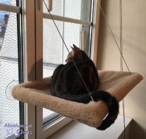 le pica ou mon chat mange tout ce qu 39 il ne faut pas absolument chats. Black Bedroom Furniture Sets. Home Design Ideas