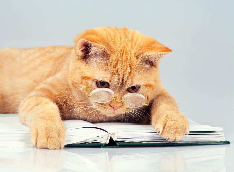 les meilleurs livres sur les chats absolument chats. Black Bedroom Furniture Sets. Home Design Ideas