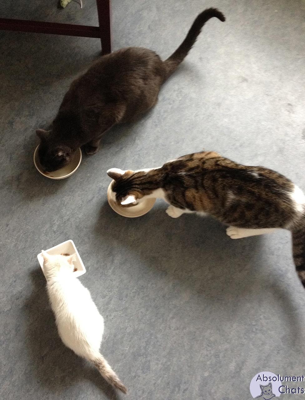 rencontre chiot et chat adulte cite de plan cul
