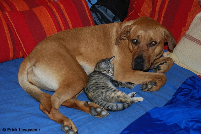 rencontre chien chat adulte site pour adultes gratuit