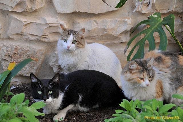les femmes blanches mangent la chatte noire brésilien porno tube