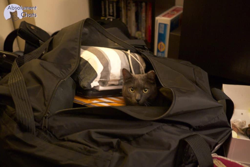 titouille dans la valise- Absolument Chats
