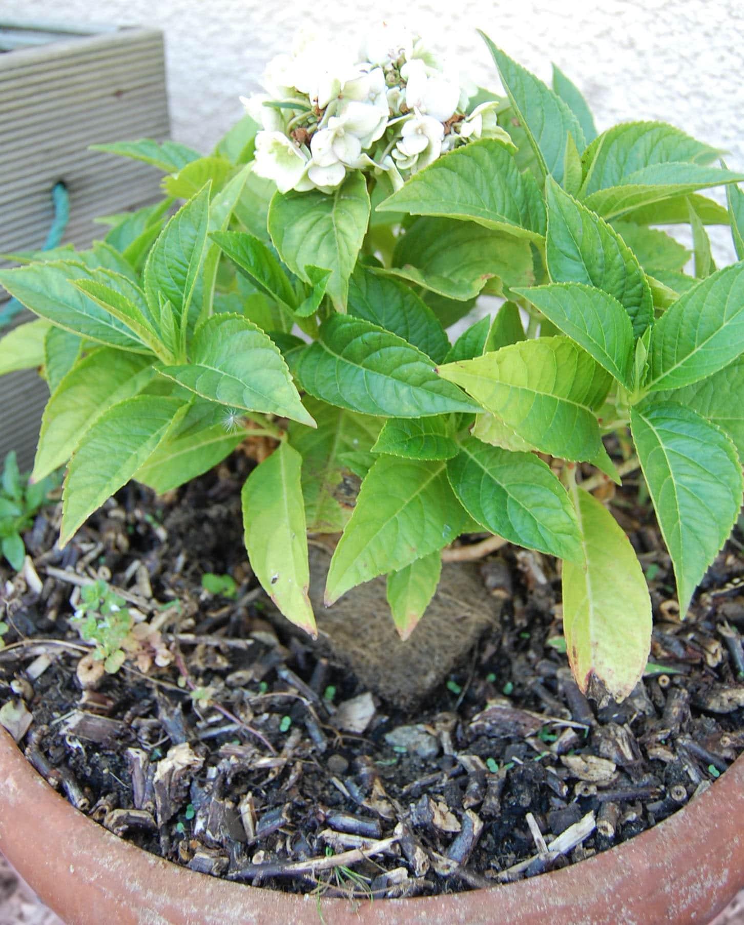 astuces pratiq protéger plantes – groupe sister