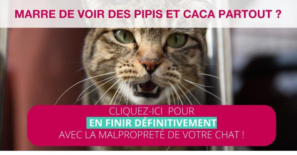 Malproprete Du Chat Comment Y Remedier Absolument Chats