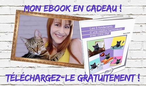 mon ebook en cadeau _ absolumentchats