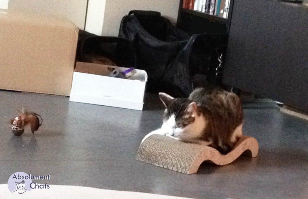 Le chat, ou l'importance des griffes - Absolument Chats