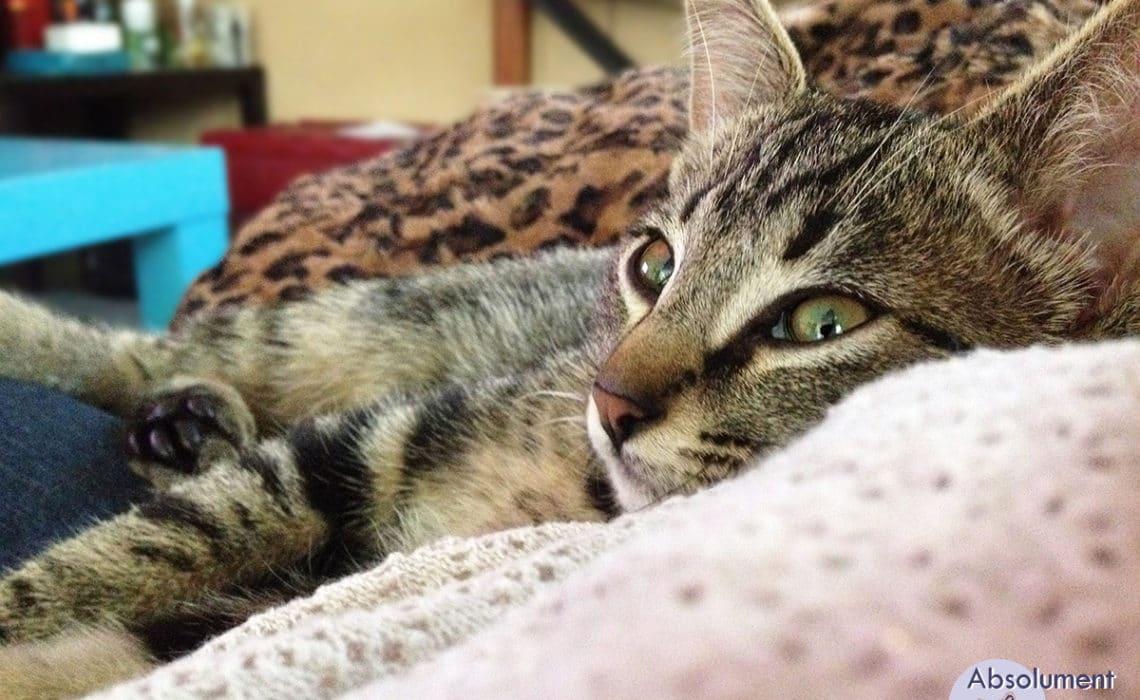 chats adultes cohabitation chelles