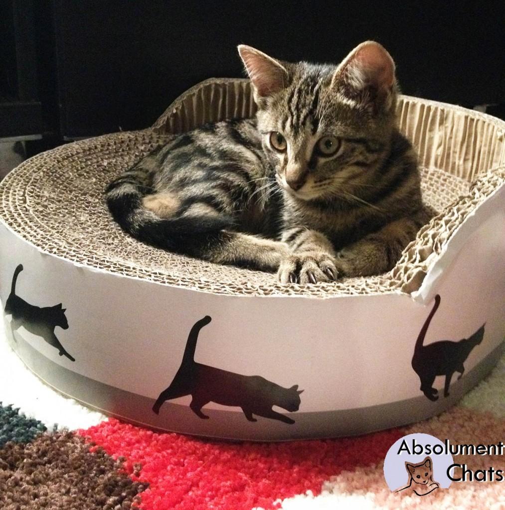 parcours mural chat pidan studio griffoir nuage pour chats arbre a chat mural design pidan. Black Bedroom Furniture Sets. Home Design Ideas