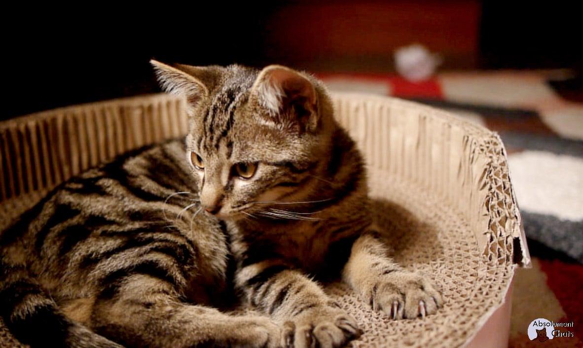Griffoir Chat Carton Design des griffoirs qui font du bien - absolument chats