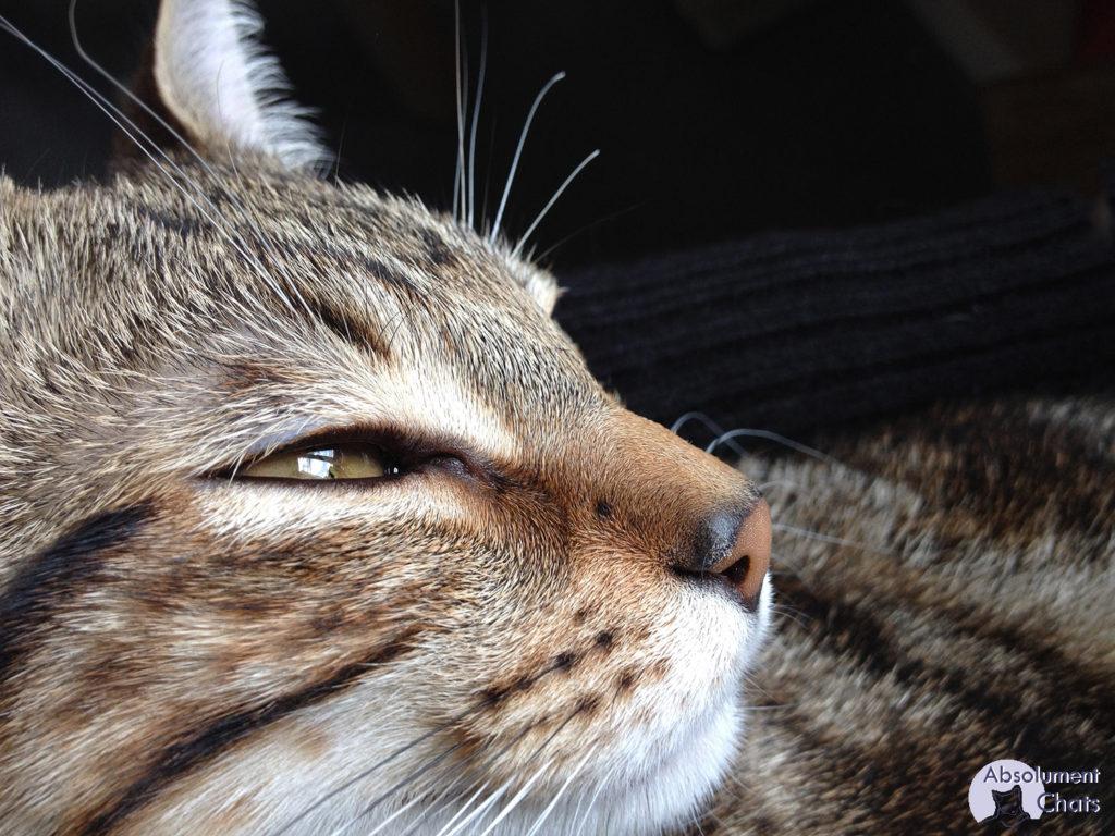 comment voit le chat_ Absolument Chats
