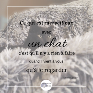 citation-chat-absolument-chats1