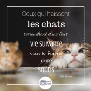Citations sur les chats - Chat qui dort sur son maitre ...