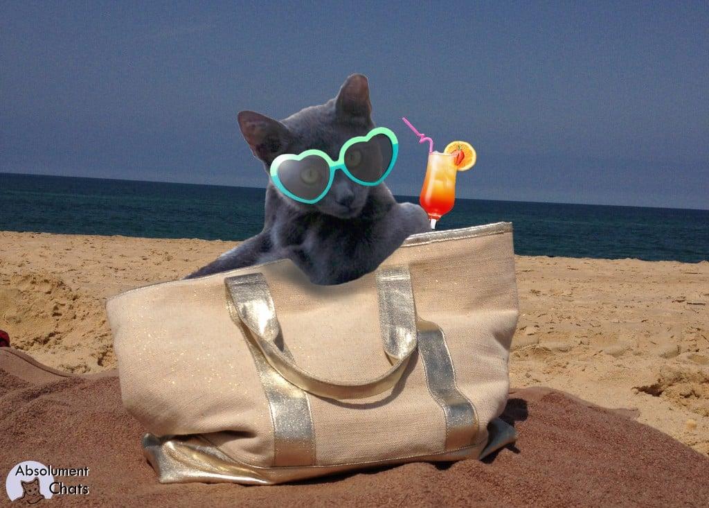 """Résultat de recherche d'images pour """"chat livre plage"""""""