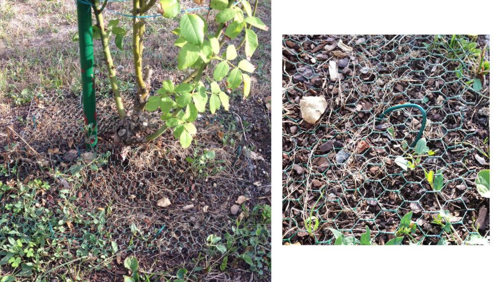 proteger ses plantations et semis des chats-absolument chats