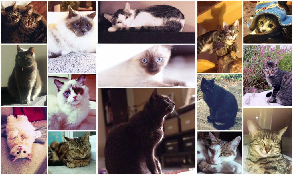 Quel surnom a votre chat- couverture- Absolument Chats
