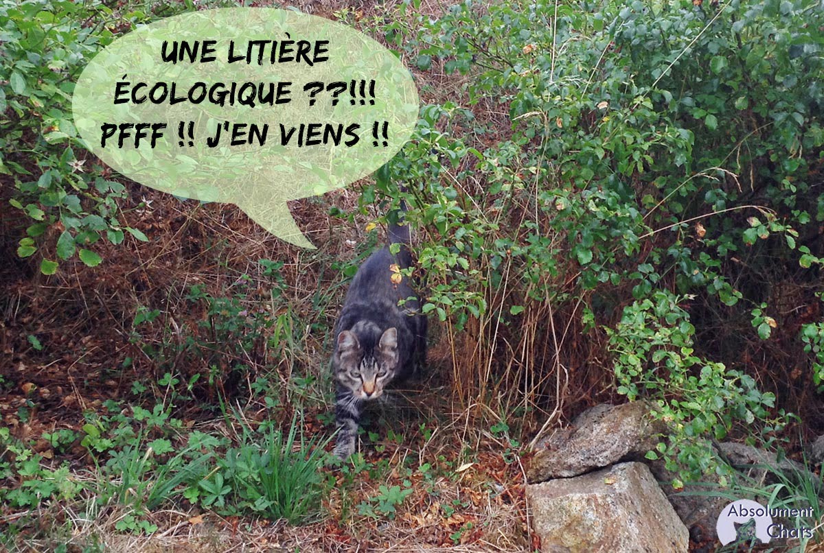 litière écologique- Absolument Chats