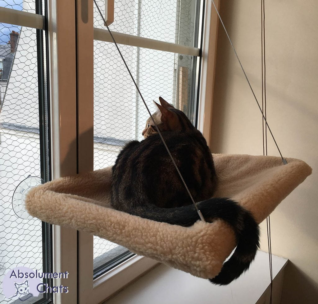 le hamac de fenetre est une bonne alternative à l'arbre à chat