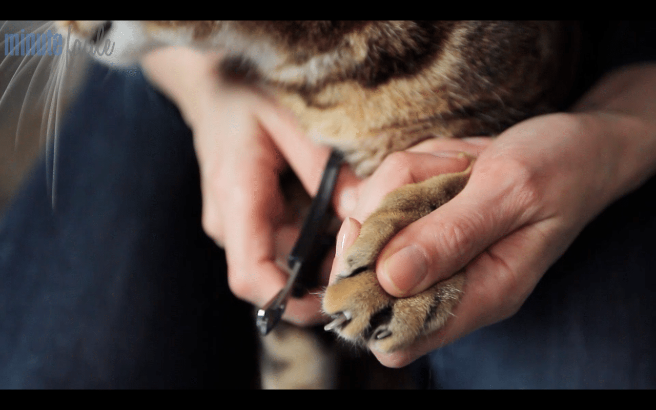 Comment couper les griffes de son chat absolument chats - Comment couper des parties d une video ...
