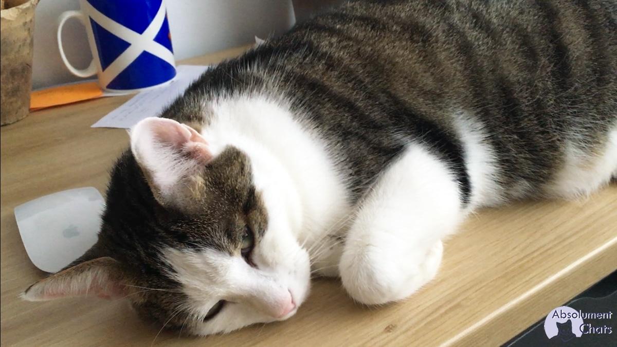 poupou-ecoute-musique-pour-chat_-absolument-chats