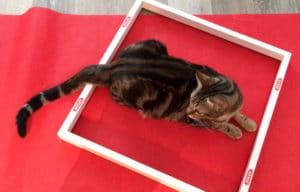 vgm-la-pose-dans-le-cadre-sur-le-tapis-rouge