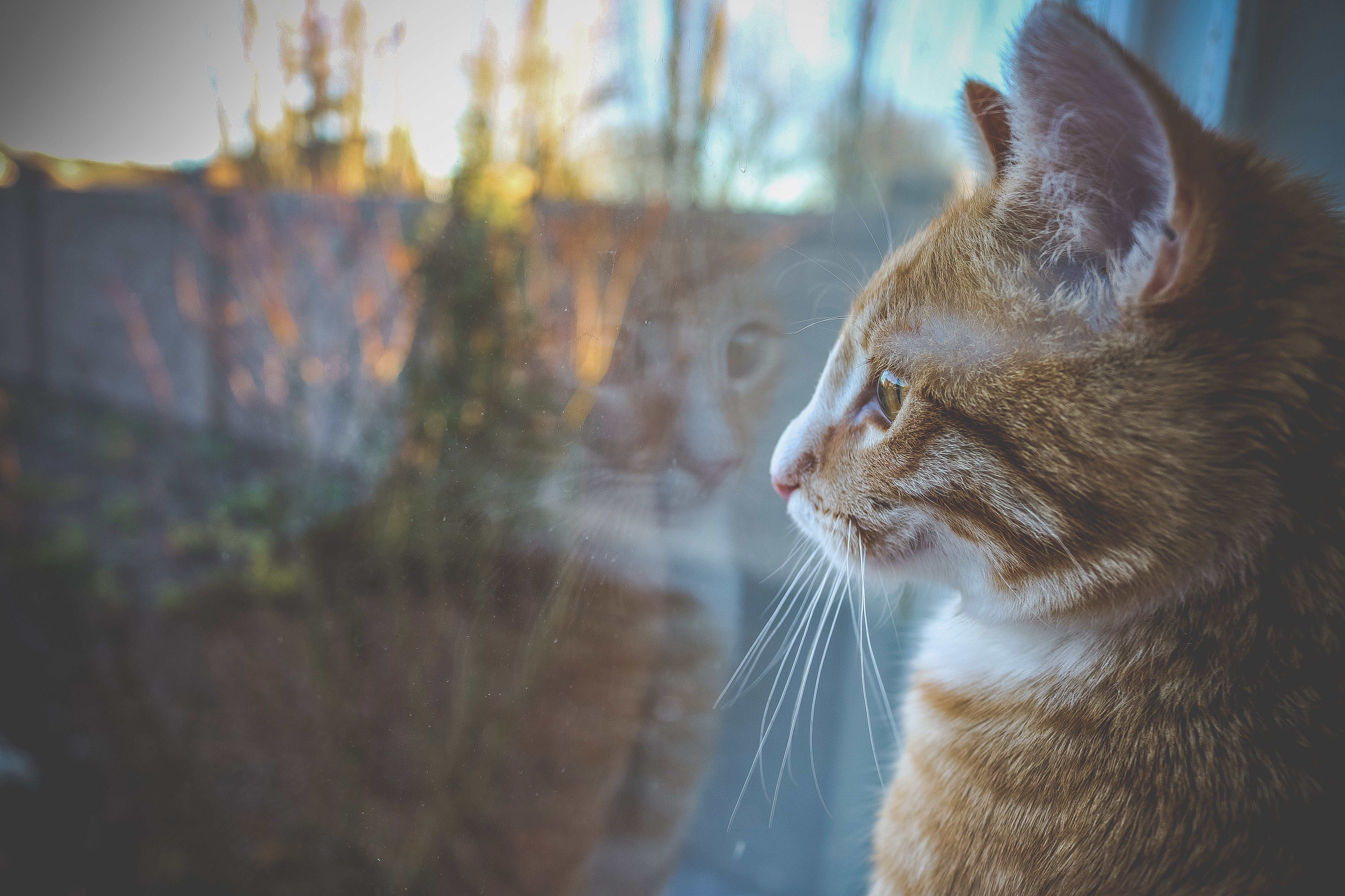 Comment Adopter Un Chat Absolument Chats