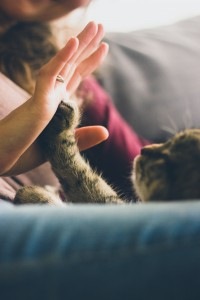 adopter un chat absolument chats