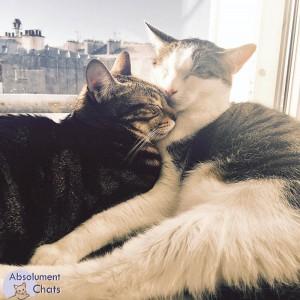 rencontre chaton chat adulte rencontre adulte offre gratuite
