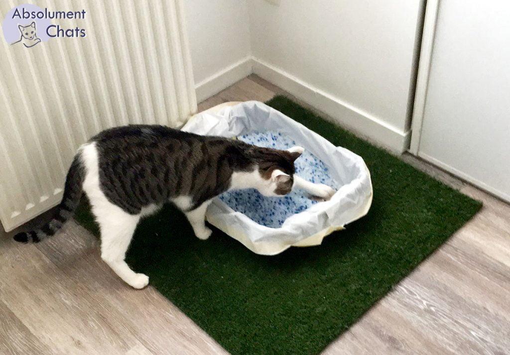 astuce pour lutter contre invasion grains de litiere par terre 2- absolument chats