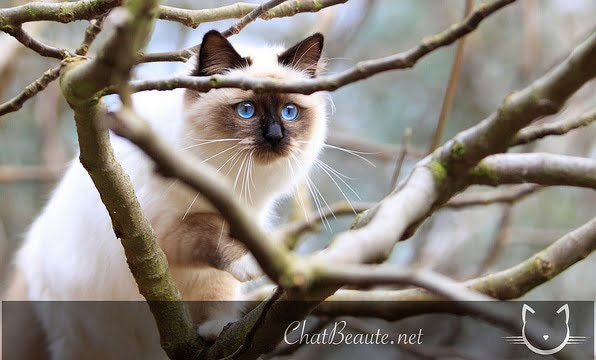 prendre de jolies photos de son chat- pierre thomas- chat beaute - absolument chats
