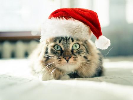 preparer noel cadeau de noel special chat_ absolument chats