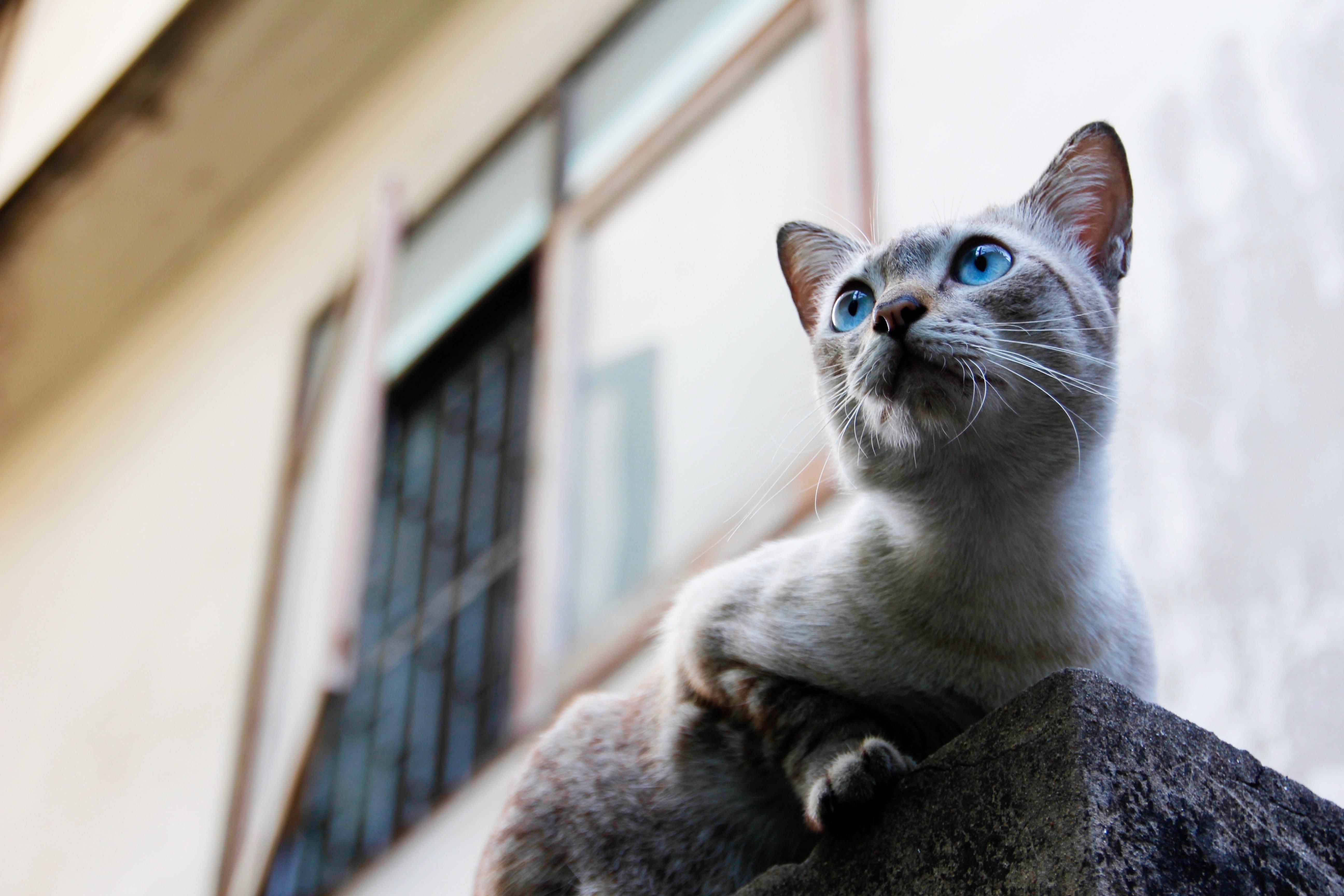 Protéger Fenêtre Balcon Terrasse Pour Que Mon Chat Ne Tombe Pas