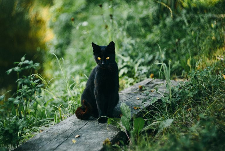 Le chat noir… toute une histoire !