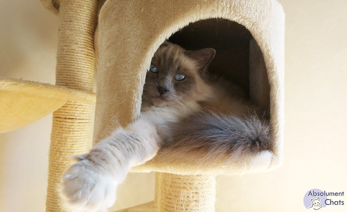Comment Fabriquer Un Arbre À Chat comment choisir un arbre à chat pour son félin