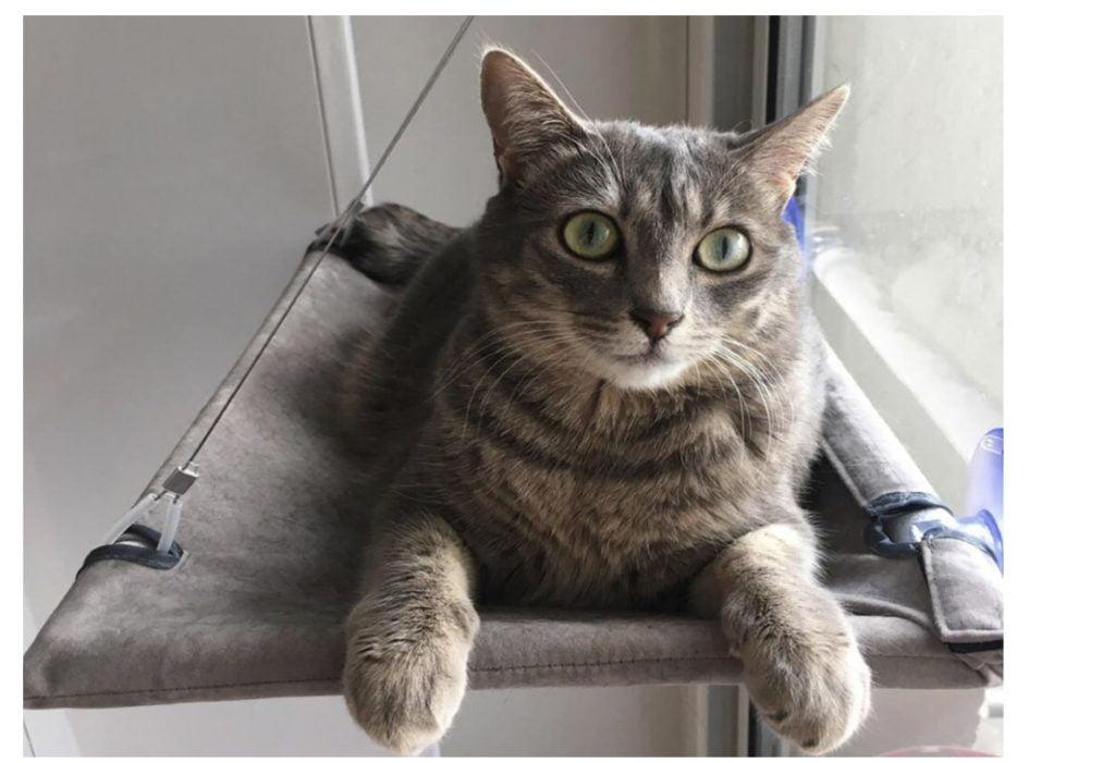 un hamac en guise d'arbre à chat