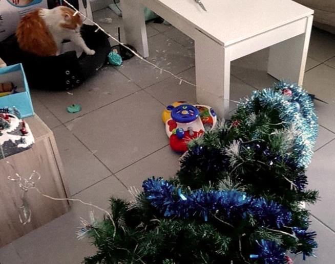 Pourquoi Les Chats Adorent Les Sapins De Noel Absolument Chats