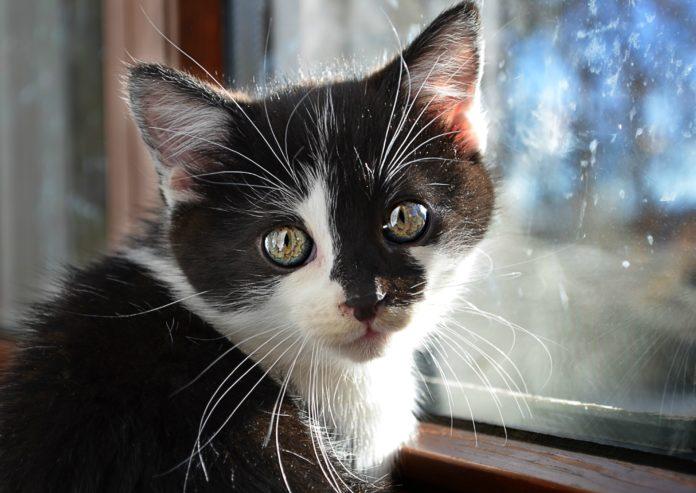 vivre avec un chat zen