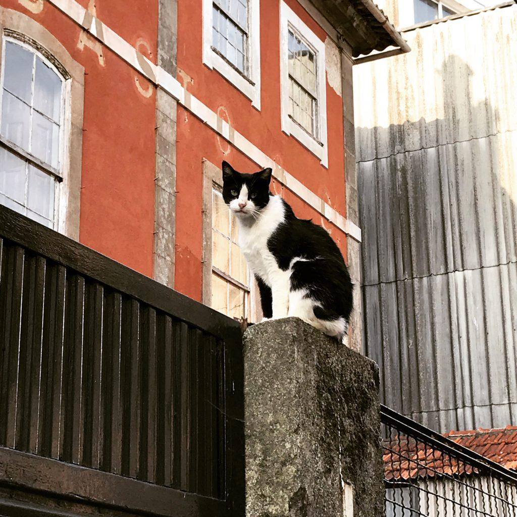 les chats on besoin d'être en hauteur pour contrôler leur environnement