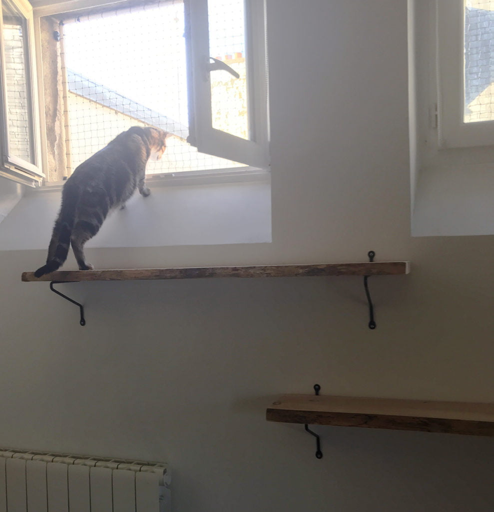 des étagères pour remplacer un arbre à chat