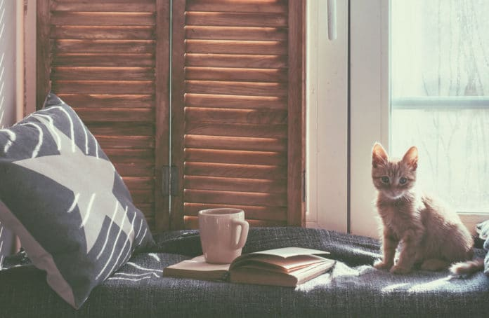 la chambre du chat
